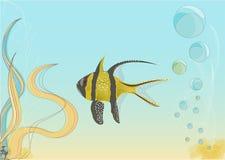 Kolor żółty ryba Zdjęcie Royalty Free