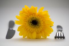 Kolor żółty talerz obrazy royalty free