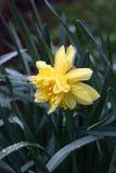 Kolor żółty wśród błękita. Fotografia Royalty Free