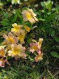 Kolor żółty z różowymi kwiatami Zdjęcia Royalty Free