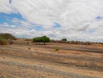 Kolor żółty ziemia w Afryka Zdjęcie Royalty Free