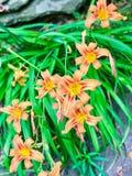 Kolor! Zdjęcie Stock