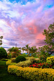 Kolor chmury kwiatu park Obrazy Royalty Free