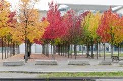 kolor drzewa Obrazy Royalty Free