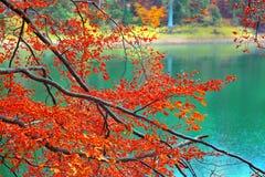 Kolor gałąź drzewa w jesieni Fotografia Royalty Free