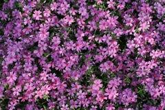 kolor jaskrawy natura Obraz Royalty Free