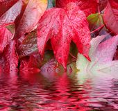 kolor jesieni Zdjęcia Royalty Free