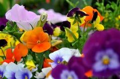 kolor kwiatów obrazy stock