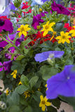 kolor kwiatów Fotografia Royalty Free