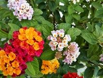kolor kwiatów Zdjęcia Royalty Free