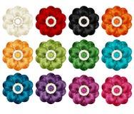 kolor kwiatów Zdjęcie Royalty Free