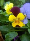 kolor kwiatów fotografia stock