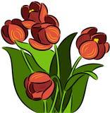 kolor kwiatów fuschia wielkiego tulipanu czerwonej wiosny żółty Zdjęcie Royalty Free