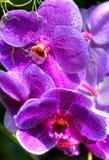 kolor lasu deszcz Fotografia Royalty Free