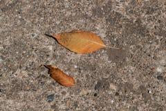 kolor liście jesienią Fotografia Royalty Free
