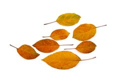 kolor liście jesienią ilustracja wektor