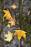 kolor liście jesienią Zdjęcia Stock