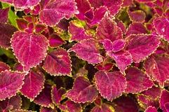 kolor liście jesienią Obrazy Royalty Free