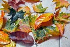 kolor liście jesienią Zdjęcie Stock