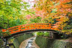 kolor li?cie jesieni? obrazy royalty free