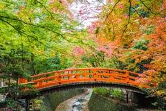 kolor li?cie jesieni? zdjęcia royalty free