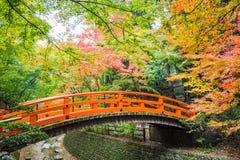 kolor li?cie jesieni? zdjęcie royalty free