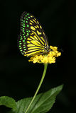 kolor motyla Zdjęcia Royalty Free