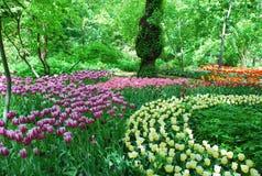 Kolor oaza z tulipanami Zdjęcie Stock