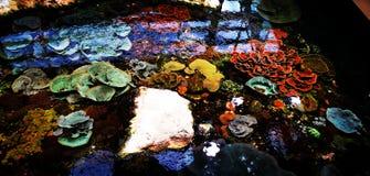 Kolor ocean obrazy royalty free