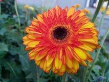 Kolor planety życie obrazuje foto f Zdjęcie Stock