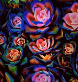 Kolor roślina obraz stock