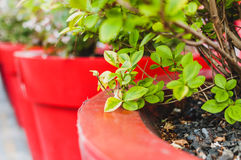 kolor słoiki Zdjęcie Royalty Free