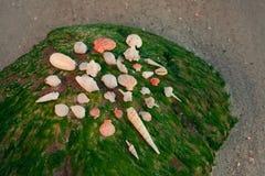 Kolor skorupy na piaskowatej plaży Obrazy Stock