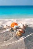 Kolor skorupy na piaskowatej plaży Zdjęcie Royalty Free