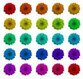 kolor sukulenty Zdjęcie Stock