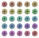 kolor sukulenty Obraz Stock