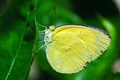 kolor żółty Obraz Royalty Free