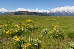 Kolor żółty góra i kwiaty Obrazy Stock