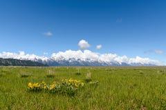 Kolor żółty góra i kwiaty Zdjęcie Royalty Free