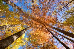 kolor wibrującego jesieni Fotografia Royalty Free