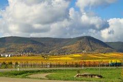 kolor winogron światło Fotografia Royalty Free