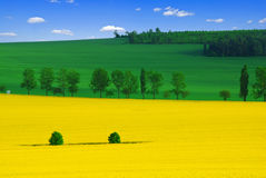 kolor wiosna fotografia royalty free