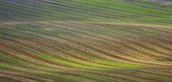 Kolor wiosny fotografia pole od widok z lotu ptaka Obraz Royalty Free