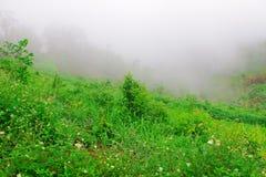 Kolor zielony sezon w tropikalnym, Tajlandia Zdjęcie Royalty Free