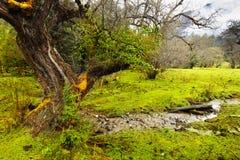 kolor zielony Tibet Zdjęcia Royalty Free