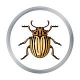 Kolorado ścigi ikona w kreskówka stylu odizolowywającym na białym tle Insekta symbolu zapasu wektoru ilustracja Obraz Stock