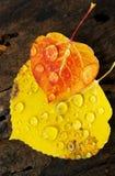 Kolorado Fall-12 3649 Zdjęcie Royalty Free