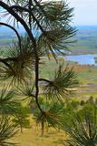Kolorado widok z sosną zdjęcie stock