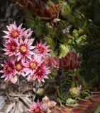 KoloradoWildflowers Lizenzfreie Stockfotografie