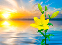 Kolorowa Żółta leluja Zdjęcie Stock